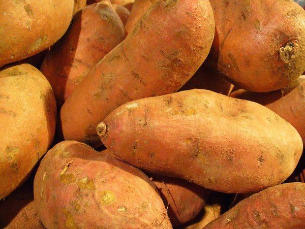 Ipomoea batatas (Patate douce)