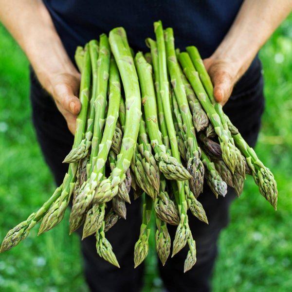 Asparagus officinalis (Asperge)