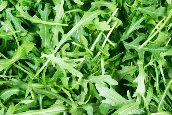 Diplotaxis tenuifolia (Roquette sauvage)