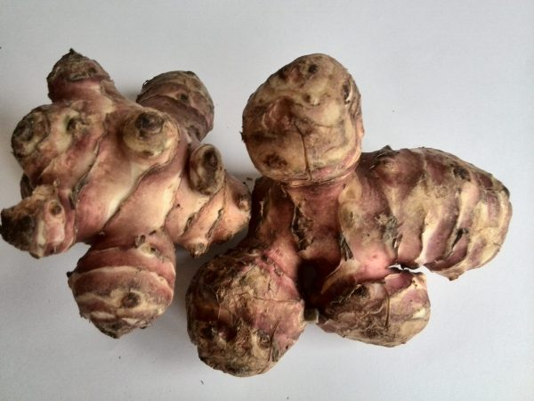 Helianthus tuberosus (Topinambour)